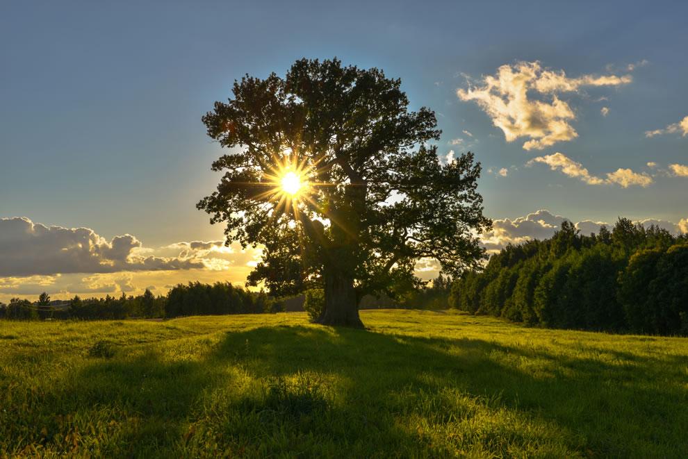 Crescer a prática como uma árvore